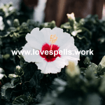 White Magic Love Spells That Work Fast